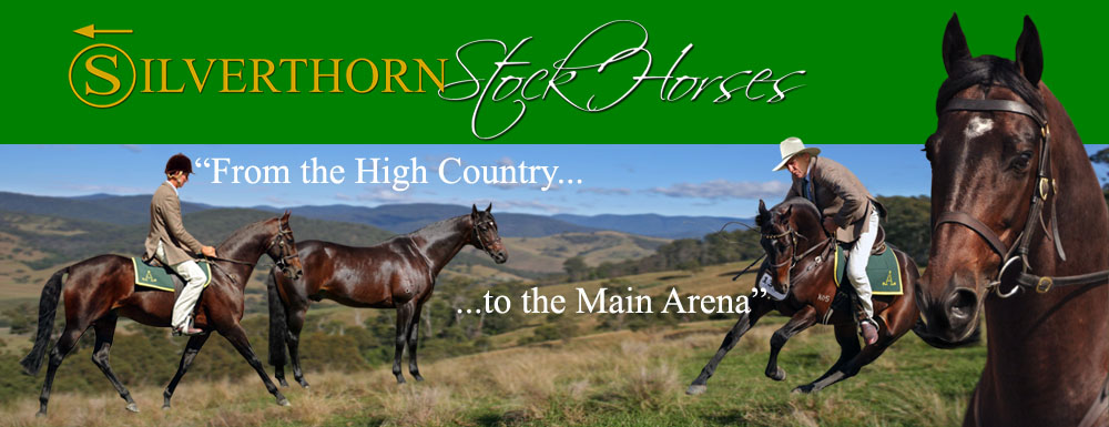 Silverthorn Stock Horses