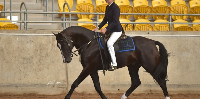 Increasingly successful rider, Brittany Hetherington rode 'Tarraway Jackson' (pictured) to fourth place overall in the 2016 Barastoc National Futurity. Brittany had a great competition and also claimed third place overall riding 'Silverthorn Man 'O War'.