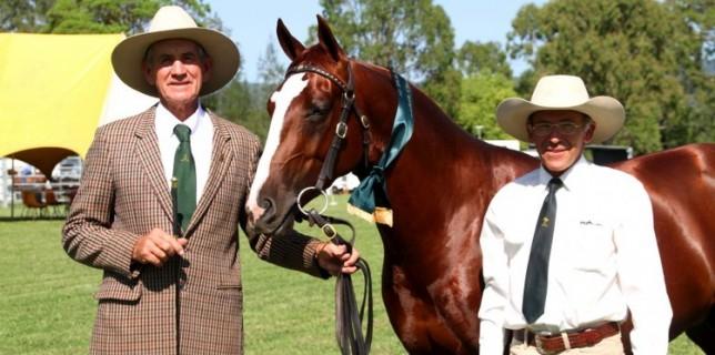 Silverthorn Man O War, Champion Led ASH Stallion/Colt